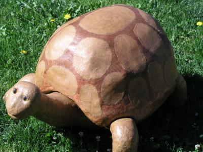 """Tortoise"" by Curtis Hart"