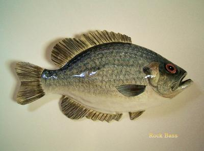 """Rock Bass"" by Sue Baker"