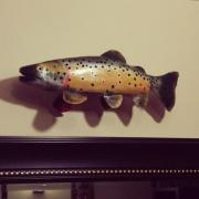 Fario trout by Alejandro Hornsby